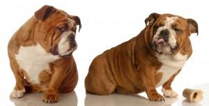 dogs-upset-300x152